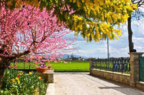 BB-le-stagioni-assisi-estate 1389